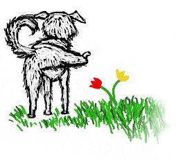 daisy-dog-final1-blog